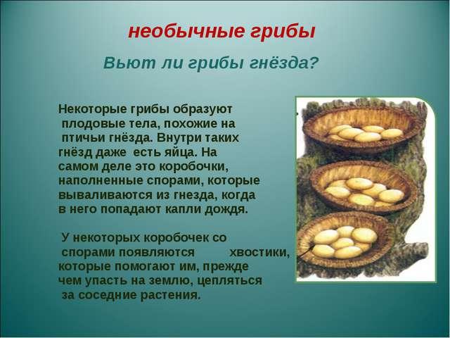 Некоторые грибы образуют плодовые тела, похожие на птичьи гнёзда. Внутри так...