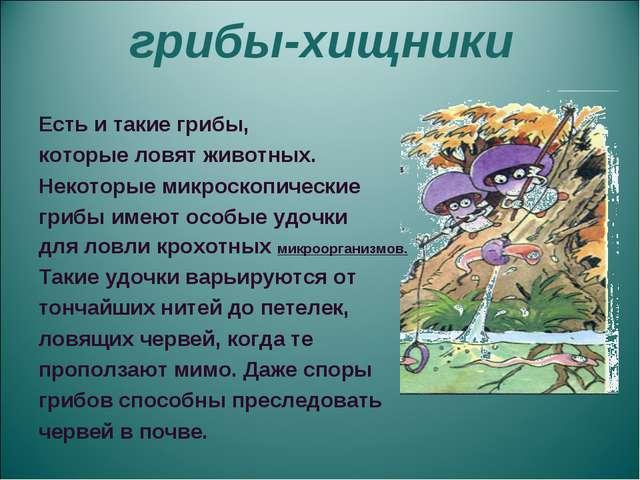 грибы-хищники Есть и такие грибы, которые ловят животных. Некоторые микроско...
