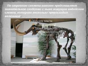 По строению скелета мамонт представляет значительное сходство с ныне живущим