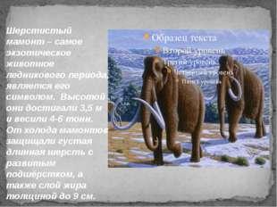 Шерстистый мамонт – самое экзотическое животное ледникового периода, является