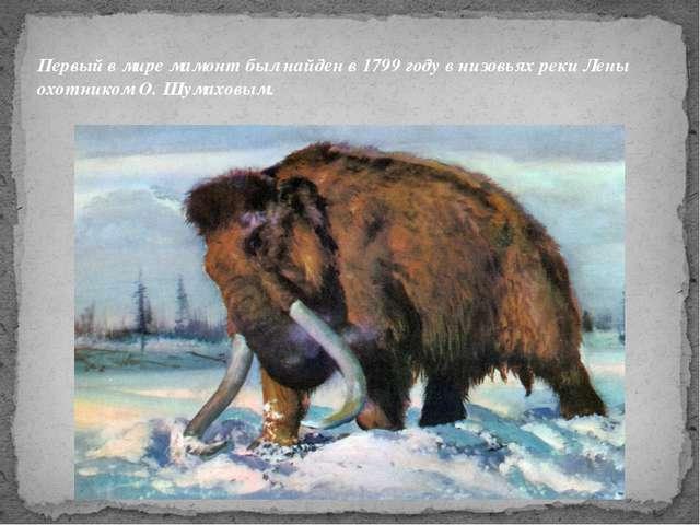 Первый в мире мамонт был найден в 1799 году в низовьях реки Лены охотником О...