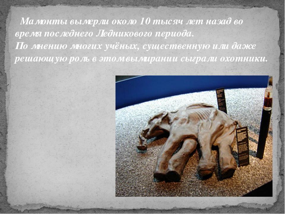 Мамонты вымерли около 10тысяч лет назад во время последнего Ледникового пер...