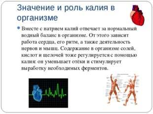 Значение и роль калия в организме Вместе с натрием калий отвечает за нормальн