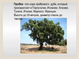 Пробка –это кора пробкового дуба, который произрастает в Португалии, Испании