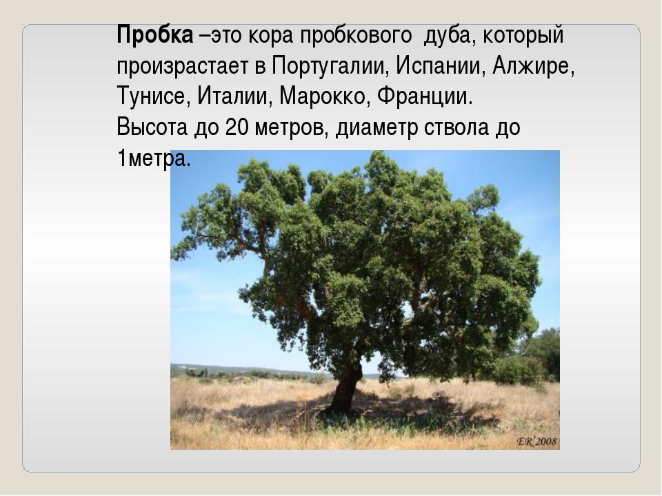 Пробка –это кора пробкового дуба, который произрастает в Португалии, Испании...