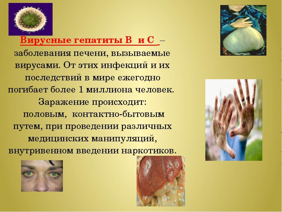 Вирусные гепатиты В и С – заболевания печени, вызываемые вирусами. От этих ин...