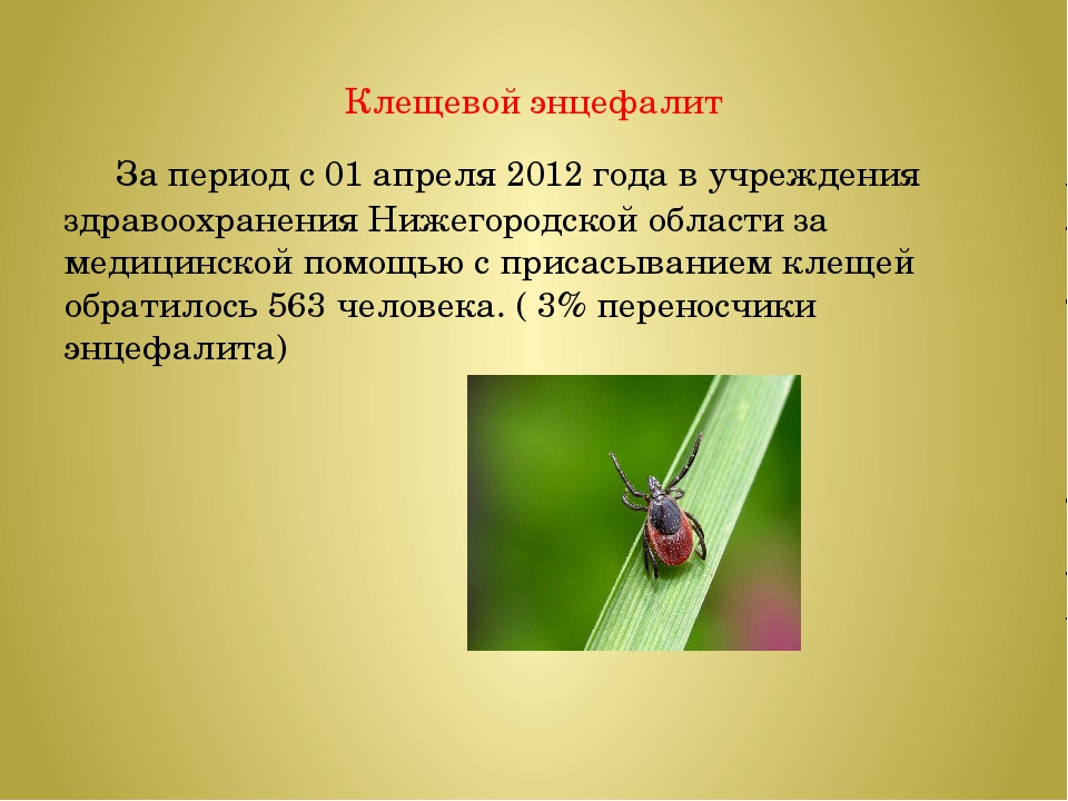 Клещевой энцефалит За период с 01 апреля2012 года в учреждения здравоохранен...