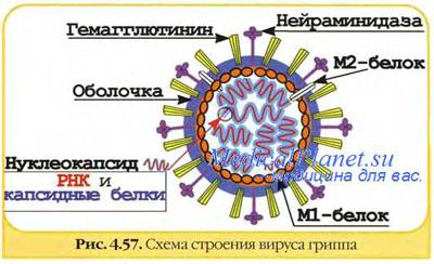 http://io.nios.ru/foto/Articles/034/1248_3.jpg