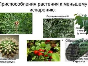 Приспособления растения к меньшему испарению. Видоизменённые листья кактуса п