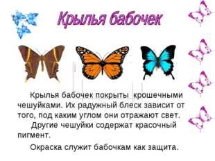 Крылья бабочек покрыты крошечными чешуйками. Их радужный блеск зависит от тог