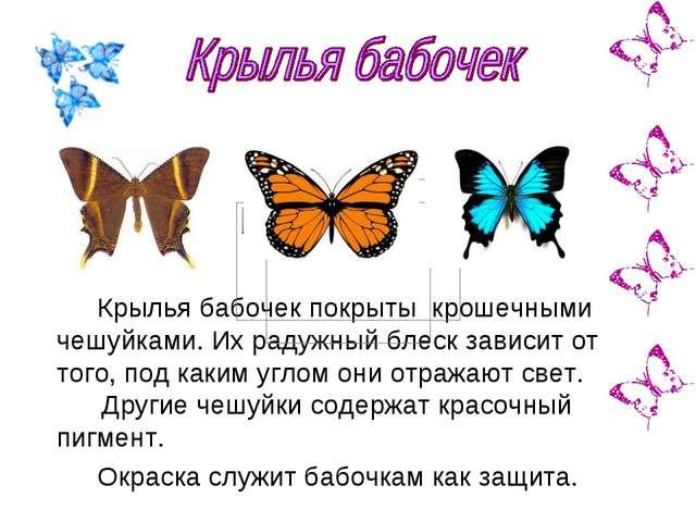 Крылья бабочек покрыты крошечными чешуйками. Их радужный блеск зависит от тог...