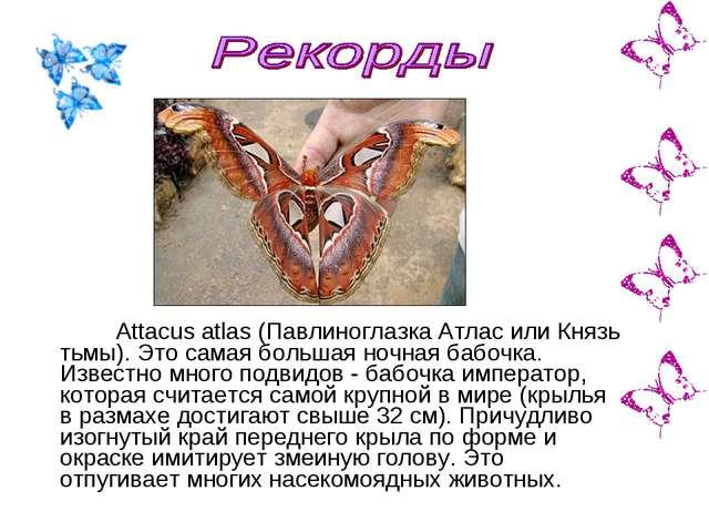Attacus atlas (Павлиноглазка Атлас или Князь тьмы). Это самая большая ночная...