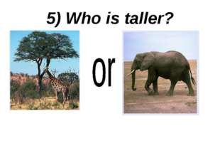 5) Who is taller?