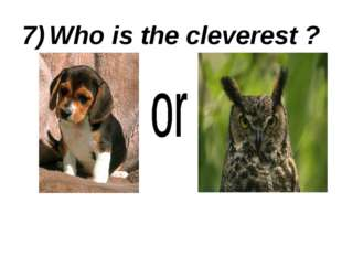 7) Who is the cleverest ?