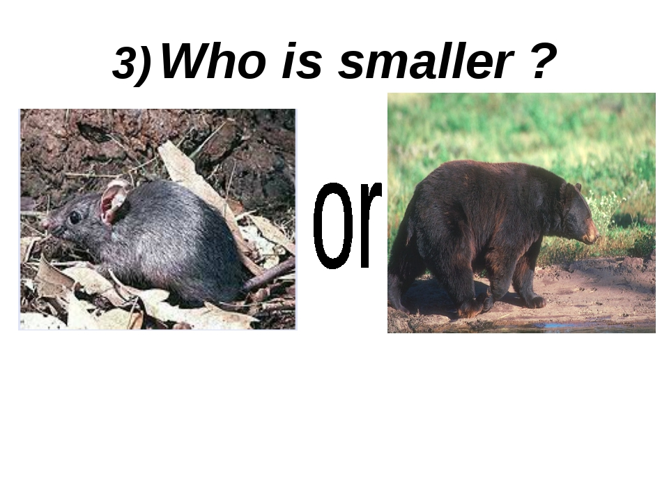 3) Who is smaller ?