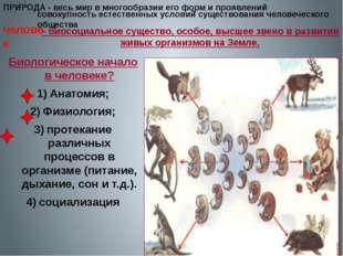 ПРИРОДА - – биосоциальное существо, особое, высшее звено в развитии живых орг