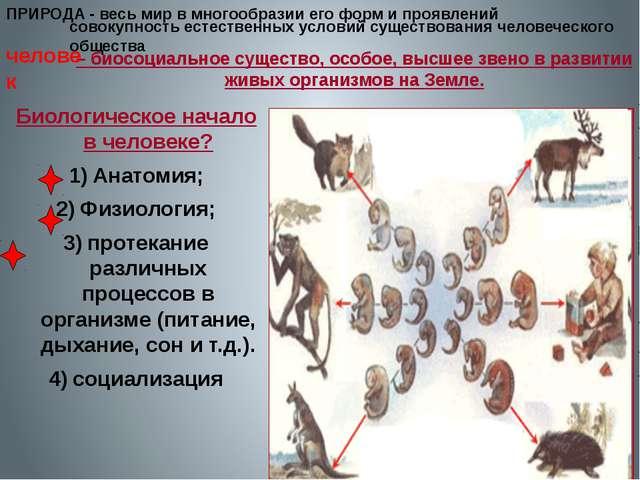 ПРИРОДА - – биосоциальное существо, особое, высшее звено в развитии живых орг...
