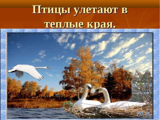 Птицы улетают в теплые края.