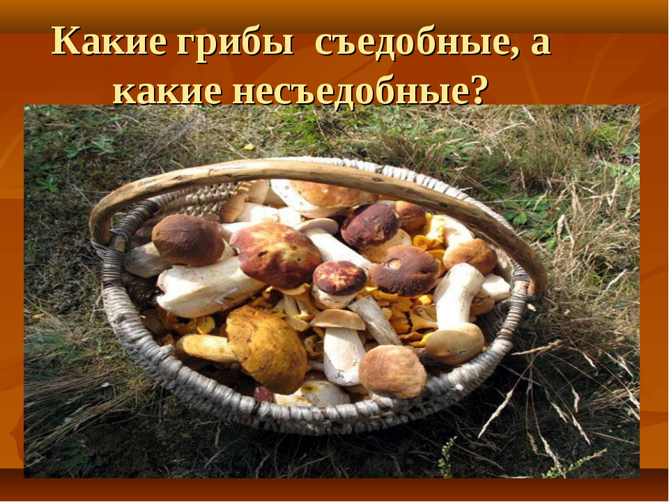 Какие грибы съедобные, а какие несъедобные?