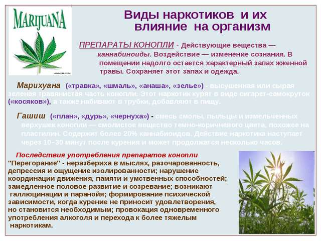 Виды наркотиков и их влияние на организм ПРЕПАРАТЫ КОНОПЛИ - Действующие вещ...