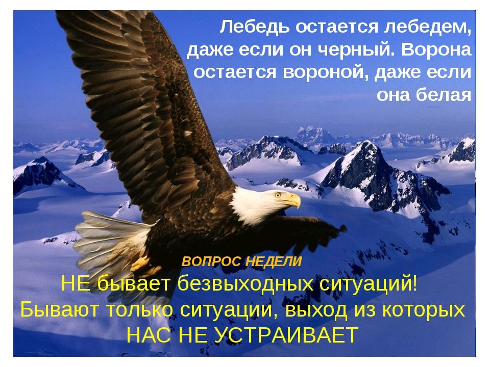 Лебедь остается лебедем, даже если он черный. Ворона остается вороной, даже е...