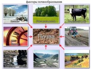 факторы почвообразования