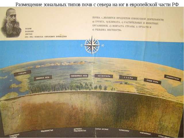 Размещение зональных типов почв с севера на юг в европейской части РФ