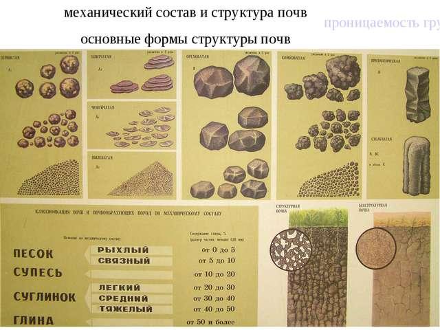 механический состав и структура почв основные формы структуры почв проницаемо...