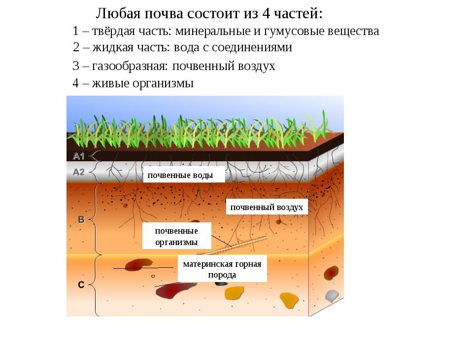 материнская горная порода почвенные воды почвенные организмы почвенный воздух...