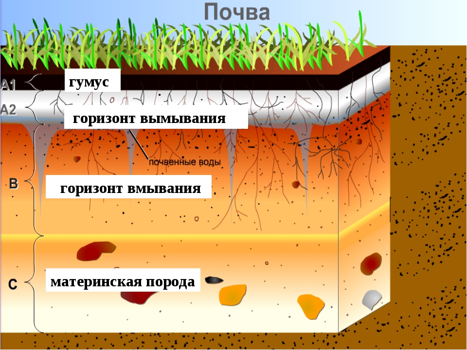материнская порода горизонт вмывания горизонт вымывания гумус