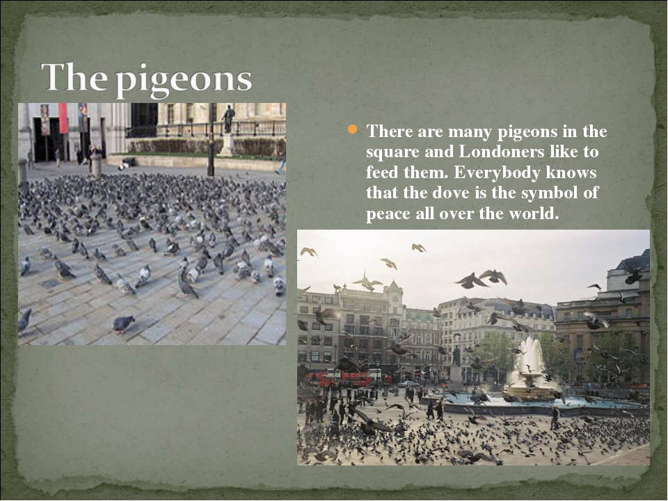 There are many pigeons in the square and Londoners like to feed them. Everybo...