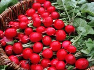 Редис в быту мы часто называем редиской. Это один из первых свежих овощей, п