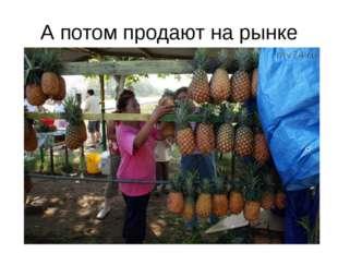 А вы знаете , что это за фрукт?