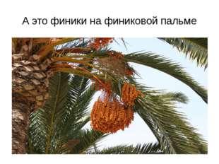 папая манго
