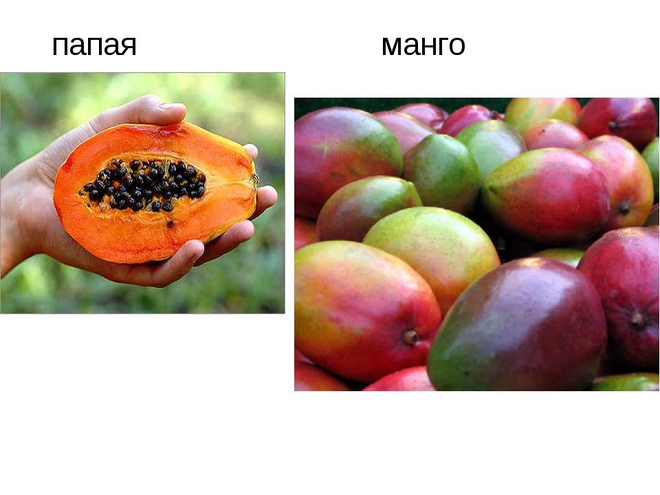 Земляничные плоды, американский абрикос, дуриан, мора