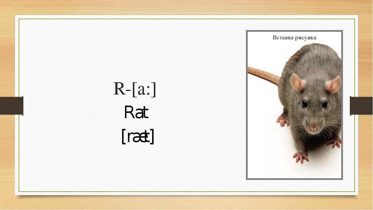 R-[a:] Rat [ræt]