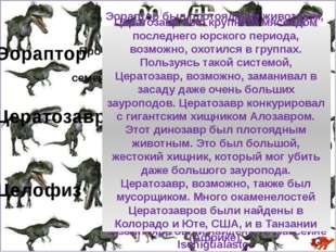 Общее задание по курсу Ответь на задания, выбирая щелчком мыши правильный от