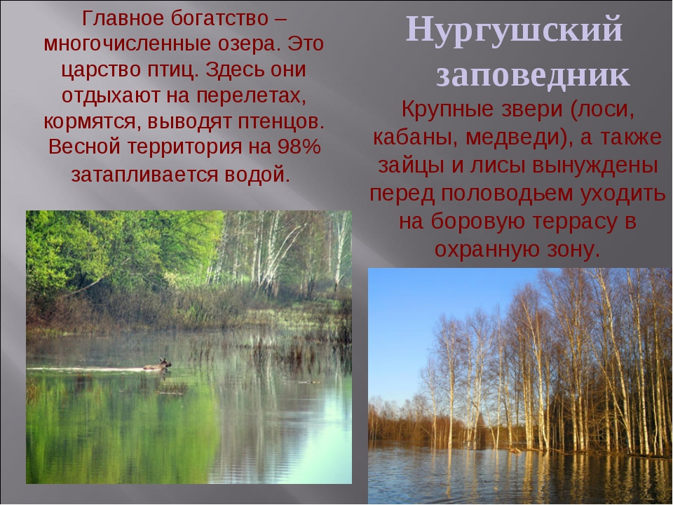 Нургушский заповедник Главное богатство – многочисленные озера. Это царство п...
