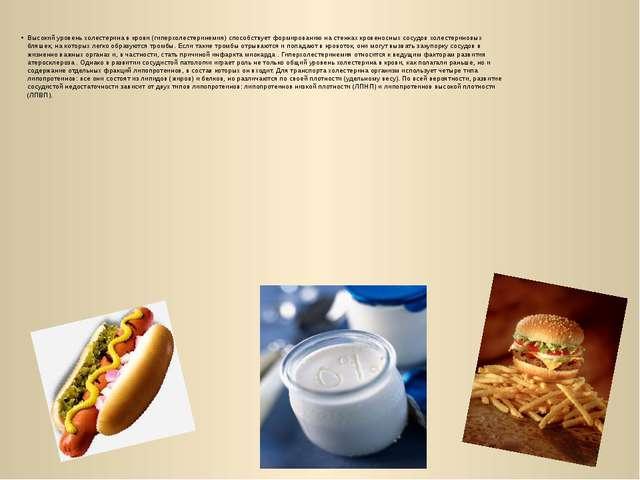 Высокий уровень холестерина в крови (гиперхолестеринемия) способствует формир...