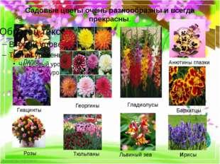Cадовые цветы очень разнообразны и всегда прекрасны. Лилия Гладиолусы Львиный