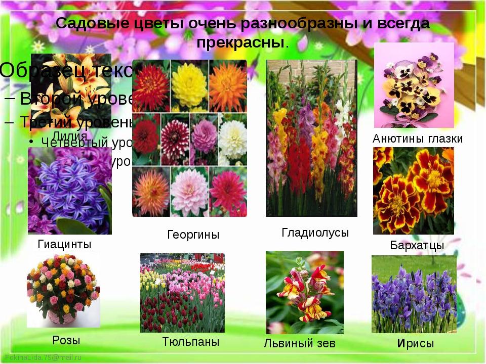 Cадовые цветы очень разнообразны и всегда прекрасны. Лилия Гладиолусы Львиный...