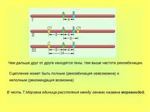 Чем дальше друг от друга находятся гены, тем выше частота рекомбинации. Сцепл