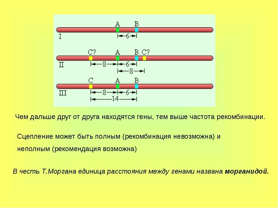 Чем дальше друг от друга находятся гены, тем выше частота рекомбинации. Сцепл...