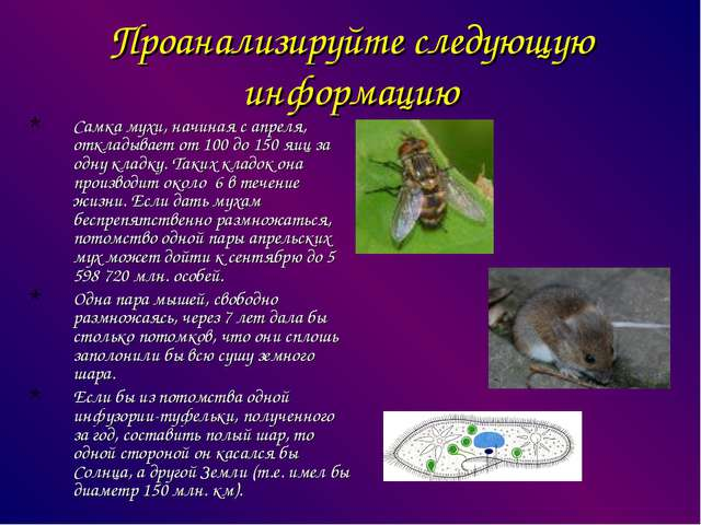 Проанализируйте следующую информацию Самка мухи, начиная с апреля, откладывае...