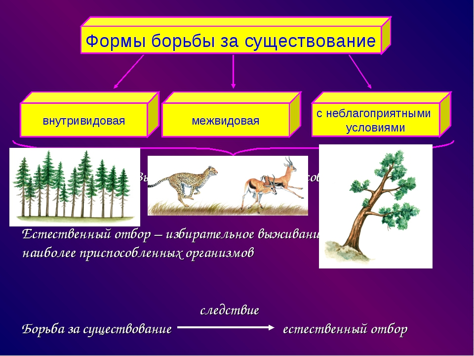 Выживают наиболее приспособленные Естественный отбор – избирательное выживан...