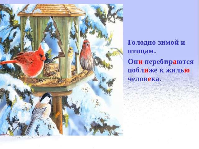 Голодно зимой и птицам. Они перебираются поближе к жилью человека.