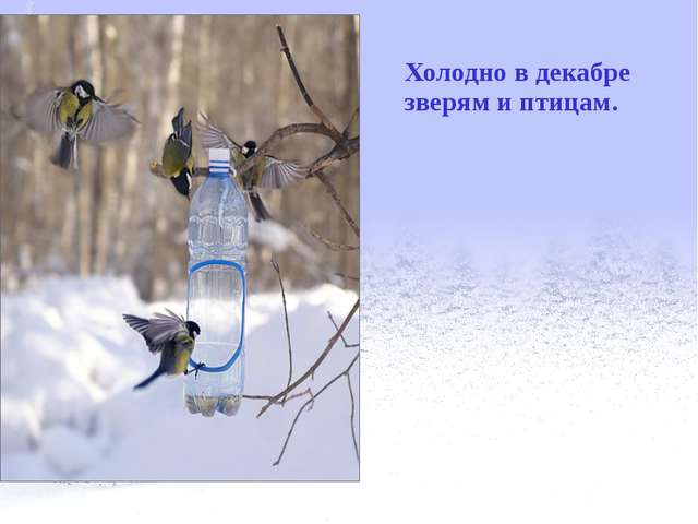 Холодно в декабре зверям и птицам.