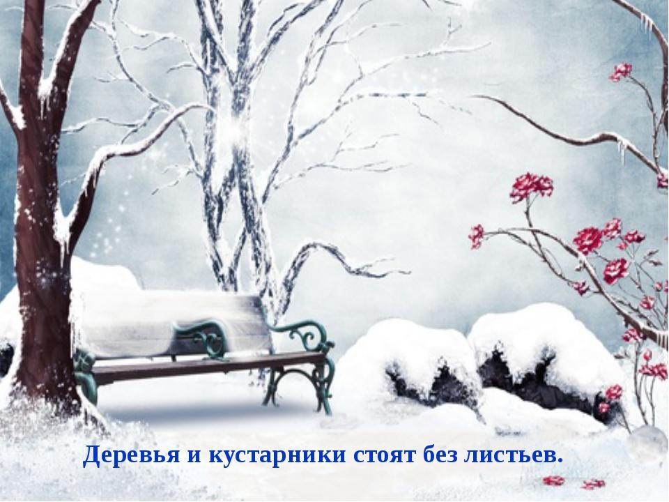 Деревья и кустарники стоят без листьев.