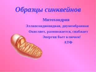 Образцы синквейнов Митохондрия Эллипсоидновидная, двумембранная Окисляет, раз