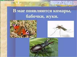 В мае появляются комары, бабочки, жуки.